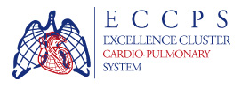 Excellence Cluster Cardio-Pulmonary System
